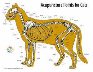 acupuncture-points-for-cats