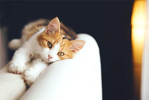 Answers to the Top 10 Questions About Cats