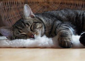 gray tabby cat sleeping on cat bed